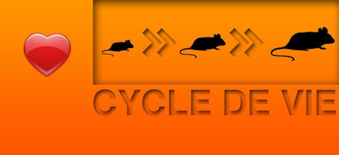 Infos et conseils sur les souris les souricides et les solutions anti souris - Solution radicale contre les souris ...